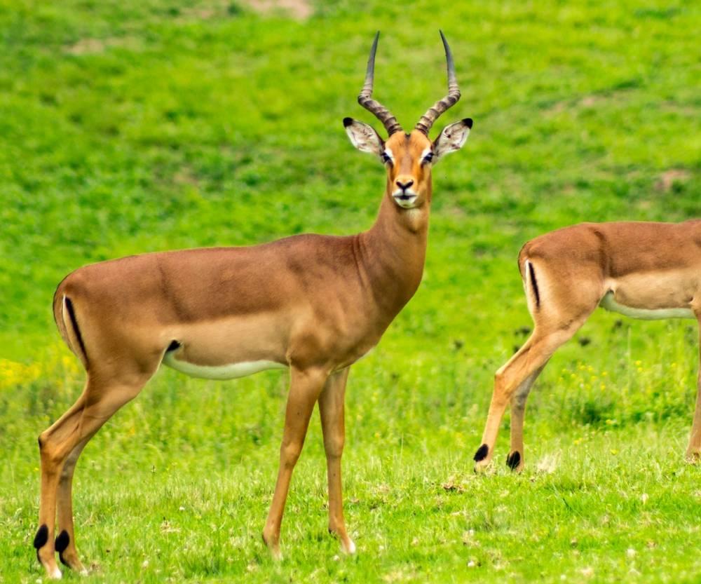 HD Hayvan Resimleri, Ücretsiz Arka Plan HD Resimler 13