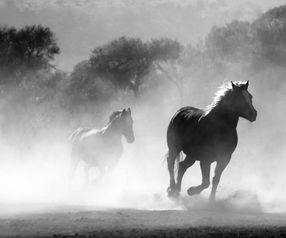 HD Hayvan Resimleri, Ücretsiz Arka Plan HD Resimler 21