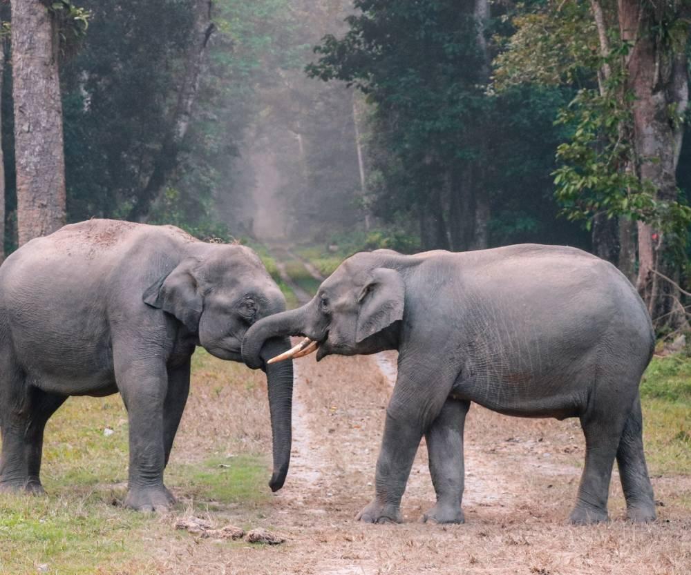 HD Hayvan Resimleri, Ücretsiz Arka Plan HD Resimler 36