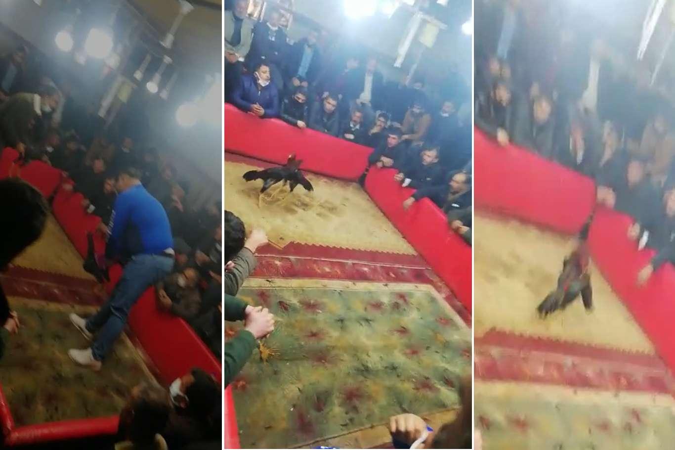 Horoz Dövüştüren Vijdansızlara Ceza Yağdı