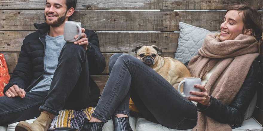 Yurt Dışında Köpek Gezdirerek Para Kazanmak. İş Fikirleri