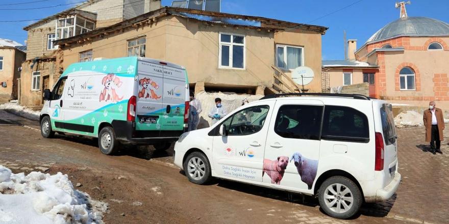 Van'da Sokak Hayvanlarına Yönelik İlaç Tedavisi Çalışmaları Başlatıldı