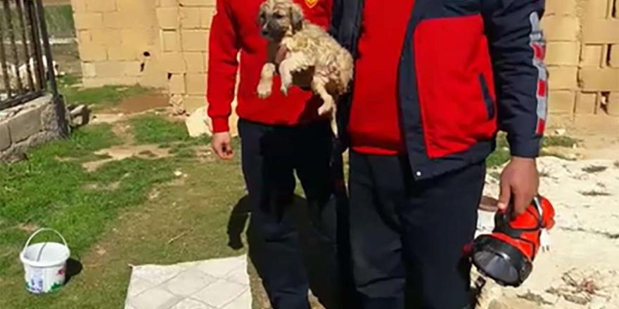 Şanlıurfa'da Sondaj Kuyusuna Düşen Yavru Köpek İtfaiye Tarafından Kurtarıldı