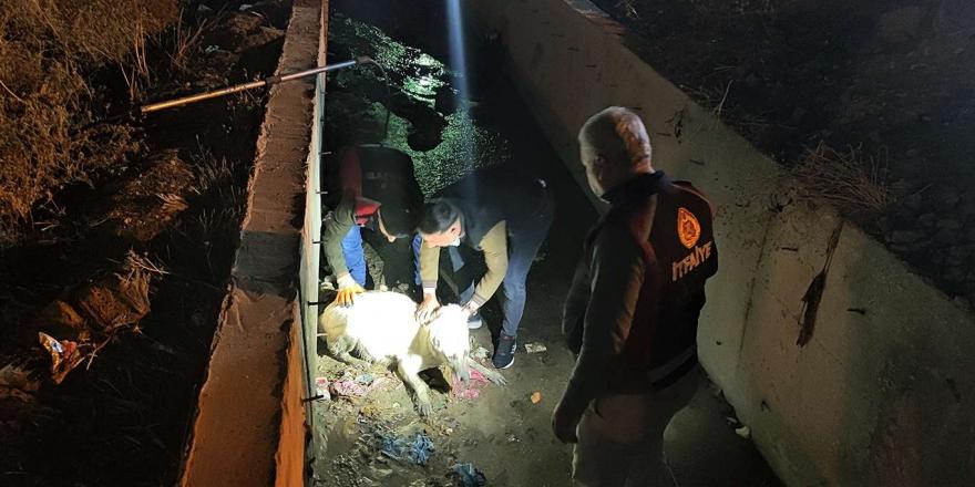 Kanalda Mahsur Kalan Hamile Köpeği İtfaiye Ekibi Kurtardı