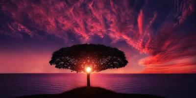 Güneşin Faydaları Ve Zararları Nelerdir?