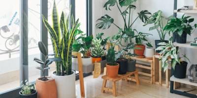 Bahçe Dekorasyonu İçin En İyi 10 Öneri